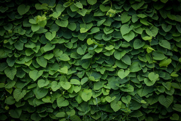 green wall, plant background Wall mural