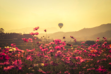Wall Mural - Landscape of  beauty cosmos flowers and the balloons floating in the sky during sunset (Vintage Edition)