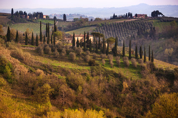 Typical Tuscan landscape