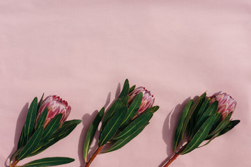 Floral frame with protea flowers on pink background. Top view