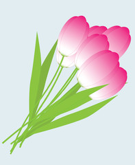 Tulips isolated on a white background, vector image