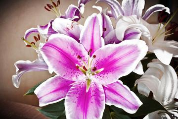 Primo piano dei  colorati fiori di giglio.