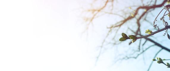 Knospen am Baum - Frühling und Wachstum