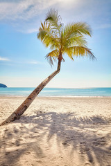 Lonely palm tree on a beautiful tropical beach at warm sunset light.