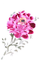 Watercolor pink peony on a white background