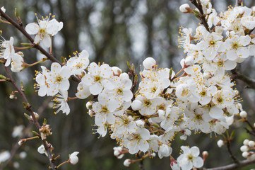 white blossom trees and green leaves