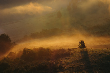 A lonely tree on hilly mountains. Morning mist on the Altai. Charming