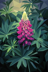 Lupine - Illustration of a pink colorful flower
