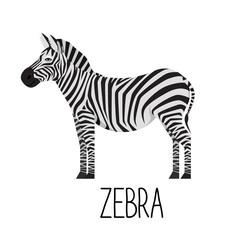 Cartoon cute zebra vector flat illustration. Wild herbivorous animal. African fauna species.