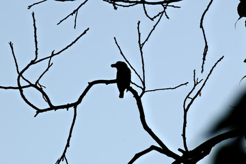 silhouette bird on the tree