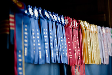 Row of show ribbons