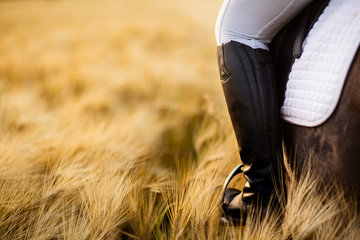 Close up of horse riders boot in stirrup in a wheat field