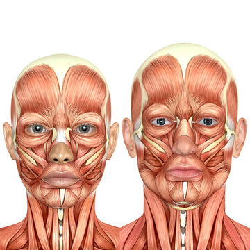 3d male and female face anatomy together