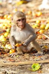 Monkey eating the fruit at the roadside of India