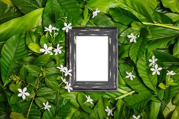 wooden frame on green leaf