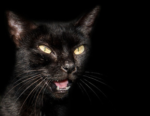 Black cat with yellow piercing eyes and mouth open isolated on black with copy space