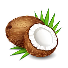 Coconut (whole fruit and half) with palm leaves, isolated on white background.