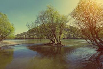 Foto op Canvas Bestsellers Riverbank in spring - vintage color effect