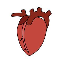 human heart icon image vector illustration design