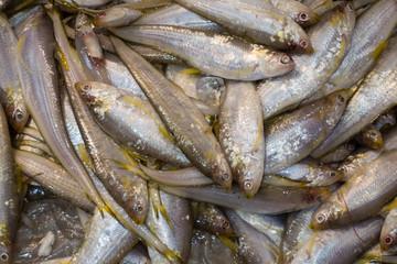 Impressionen Fischmarkt Hongkong