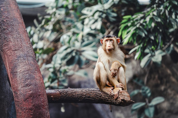 One sad and thoughtful Monkey sitting on the tree in a zoo