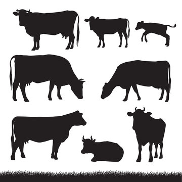 Silhouettes of grass, caws and baby cows in different poses isolated on white background