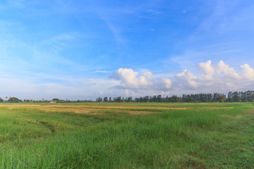 Beautiful green field with blue sky for background.