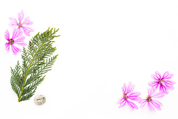 Postcard with empty place for inscription from scattered pink small flowers, twigs of thuja, sea stone and seashells on a light background