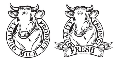 Set of vector an dairy cows label on white background sketch drawing