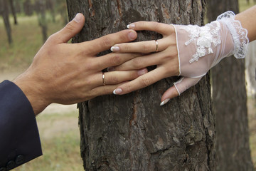 Wedding rings. Happy wedding day. The newlyweds. Hands of lovers on the background of a tree with wedding rings. Romance