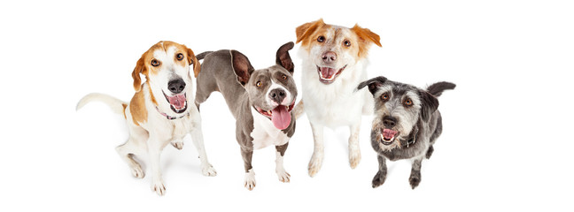Four Happy Dogs Looking Up Horizontal Banner