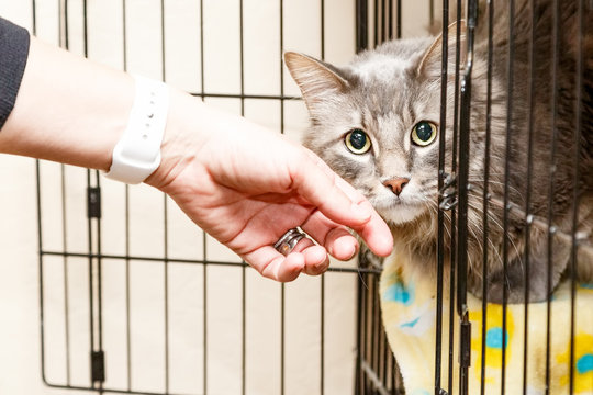 Hand Petting Scared Cat in Cage