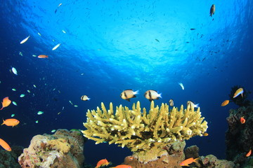 Underwater coral reef with fish in ocean