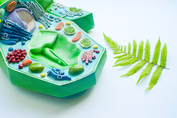Plant leaf and model of plant cell in laboratory