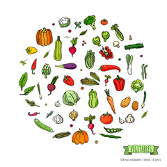 Hand drawn doodle seasonal vegetables icons set. Vector illustration. Carton food symbols collection. Isolated on white background. Sketchy style: tomato, potato, cabbage, squash, pepper, corn, carrot