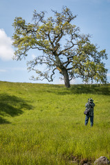 photographer photographing an oak tree on the hill