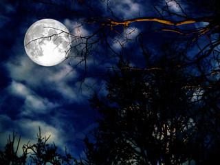 super moon silhouette dry tree