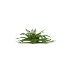 Fern isolated on white. Side view. 3D illustration