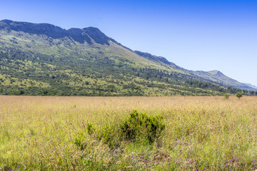 Green and yellow wavy grass field and mountains in Africa