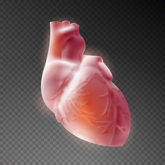 3d realistic heart human on transparent background. Vector illustration.