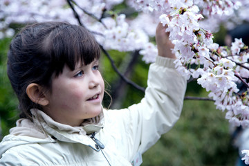 A sweet girl with a delight touches a cherry blossom sakura branch in Kyoto, Japan