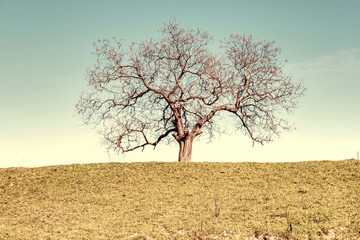 Vintage landscape - tree in retro colors