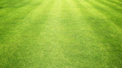 grass background Golf Courses green lawn