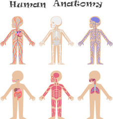 Human anatomy for kids