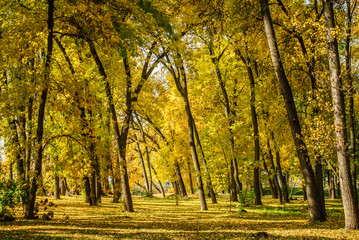 The autumn park near the town, with yellow fallen leaves and bare branches of trees
