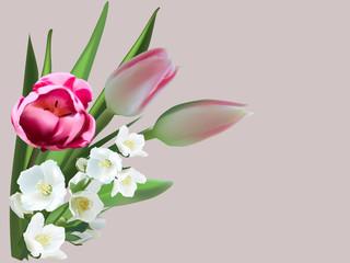 tulip and jasmine flowers on light background