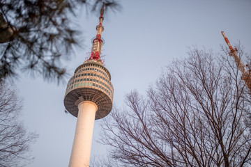 Seoul tower and pink cherry Blossom, Sakura season in spring