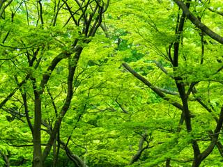 新緑の背景画像