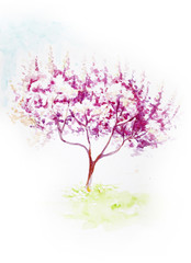 Cherry blossom watercolor painting. Illustration nice for cards as decoration or articles about spring and gardening.