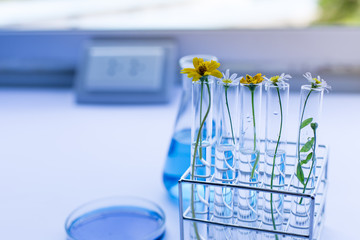 Backgrounds of Flower for education in laboratory.